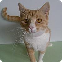 Adopt A Pet :: Jezabell - Hamburg, NY