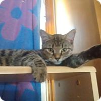 Adopt A Pet :: Jewels - Saint Albans, WV