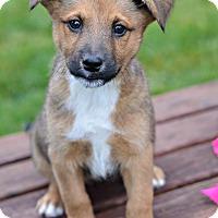 Adopt A Pet :: Spice - Delano, MN