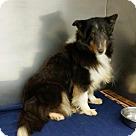 Adopt A Pet :: Mya