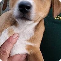 Adopt A Pet :: Ridge - Gainesville, FL