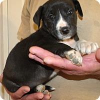 Adopt A Pet :: CIENNA - Corona, CA
