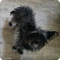 Adopt A Pet :: Princess - Encino, CA