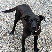 Adopt A Pet :: Mavis - Westminster, CO