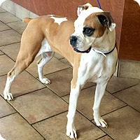 Adopt A Pet :: I'M ADOPTED Daisy Young - Oswego, IL
