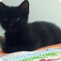 Adopt A Pet :: Frida -Ready Mid-Aug. - Arlington, VA