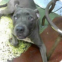 Adopt A Pet :: JEN - Atlanta, GA