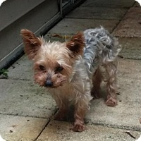 Adopt A Pet :: Cosmo - Naples, FL