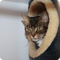 Adopt A Pet :: Cricket - Washburn, WI