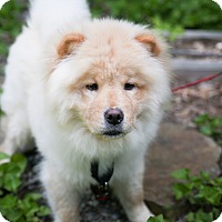 Adopt A Pet :: Khan - Coventry, CT