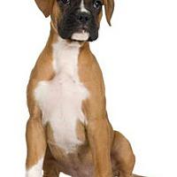 Adopt A Pet :: URGENT ON 10/28 San Bernardino - San Bernardino, CA
