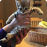 Adopt A Pet :: Aiden - Sparta, NJ