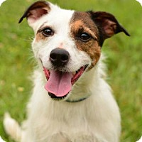 Adopt A Pet :: Archie - Dillsburg, PA