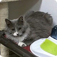 Adopt A Pet :: Fuzz Aldrin $25 Fee in Dec - Ottawa, KS