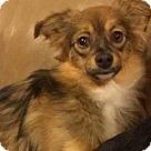 Adopt A Pet :: PUMPKIN in Rhode Island