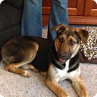 Adopt A Pet :: Dahlila - New Oxford, PA