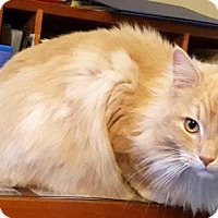 Adopt A Pet :: Puffy - Springfield, OR