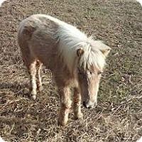 Adopt A Pet :: Anna - Loudon, TN