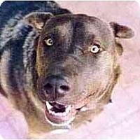 Adopt A Pet :: Lacy - Scottsdale, AZ