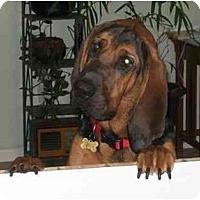 Adopt A Pet :: Crosby - Carrollton, GA