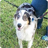 Adopt A Pet :: Lexus - Orlando, FL