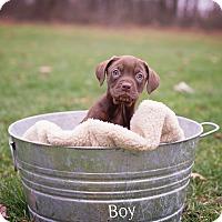 Adopt A Pet :: Bobbie - Salem, MA