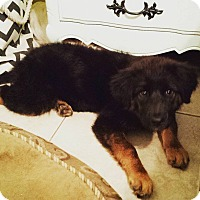 Adopt A Pet :: Mila - Scottsdale, AZ
