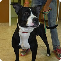 Adopt A Pet :: Holly - Palm City, FL