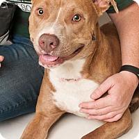 Adopt A Pet :: *POGO - Sacramento, CA