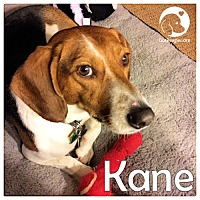 Adopt A Pet :: Kane - Novi, MI