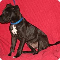 Adopt A Pet :: Lilybud - Umatilla, FL