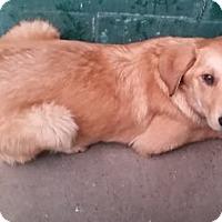 Adopt A Pet :: Johnny - Avon, NY