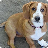 Adopt A Pet :: Ruby Roo - Prosser, WA
