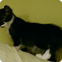 Adopt A Pet :: Barnabus - Jefferson, NC