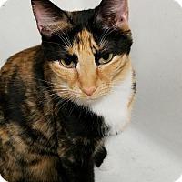 Adopt A Pet :: Delancy - Philadelphia, PA