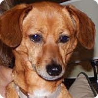 Adopt A Pet :: Lucy - Minnetonka, MN