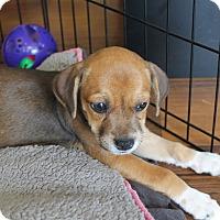 Adopt A Pet :: Heath - Flemington, NJ