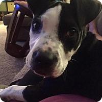 Adopt A Pet :: Beaumont - Woodbury, MN
