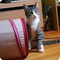 Adopt A Pet :: Jinx - Whitehall, PA