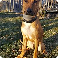 Shepherd (Unknown Type) Mix Dog for adoption in Appleton, Wisconsin - Pollyanna *Foster*