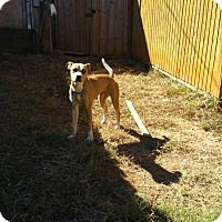 Adopt A Pet :: Mystique - Demorest, GA