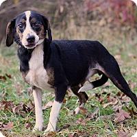 Adopt A Pet :: Mara - Waldorf, MD