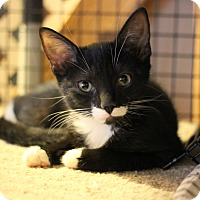 Adopt A Pet :: Willough - Carlisle, PA