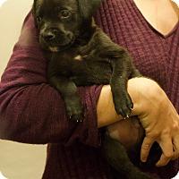Adopt A Pet :: GUMBO - Albuquerque, NM