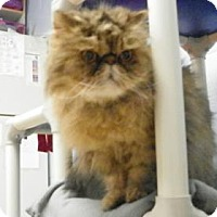 Adopt A Pet :: Lincoln - Lowell, MA