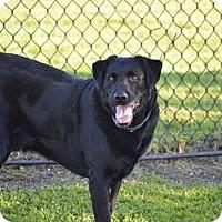 Adopt A Pet :: Asher - San Francisco, CA