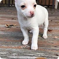 Adopt A Pet :: Lotus - Weston, FL