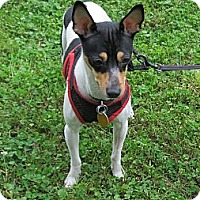 Adopt A Pet :: Pippa - Kingwood, TX