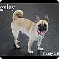 Adopt A Pet :: Pugsley - Rockwall, TX