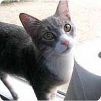 Adopt A Pet :: Jupiter - Elverta, CA